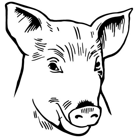 Achat Sticker cochon