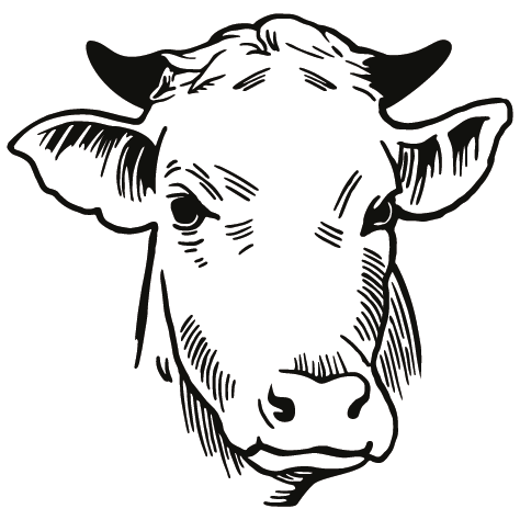 Achat Sticker tête de vache : 01