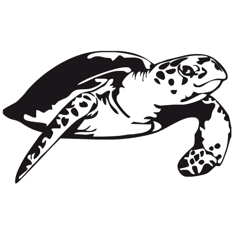 Sticker tortue - 01