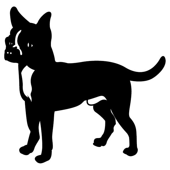 Achat chihuahua
