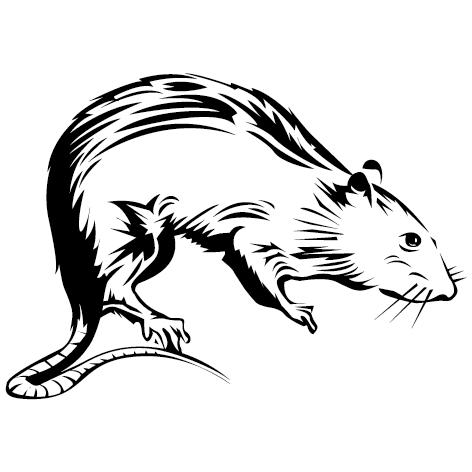 sticker rat brun