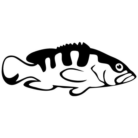 Achat Sticker Mérou : SP03