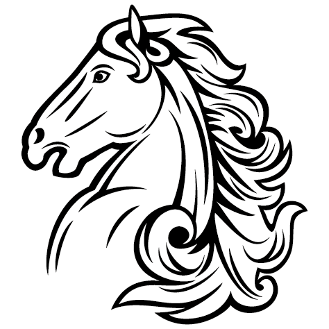 Tête de cheval pur sang Arabe